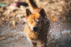 water-nature-snow-winter-wet-dog-1136150