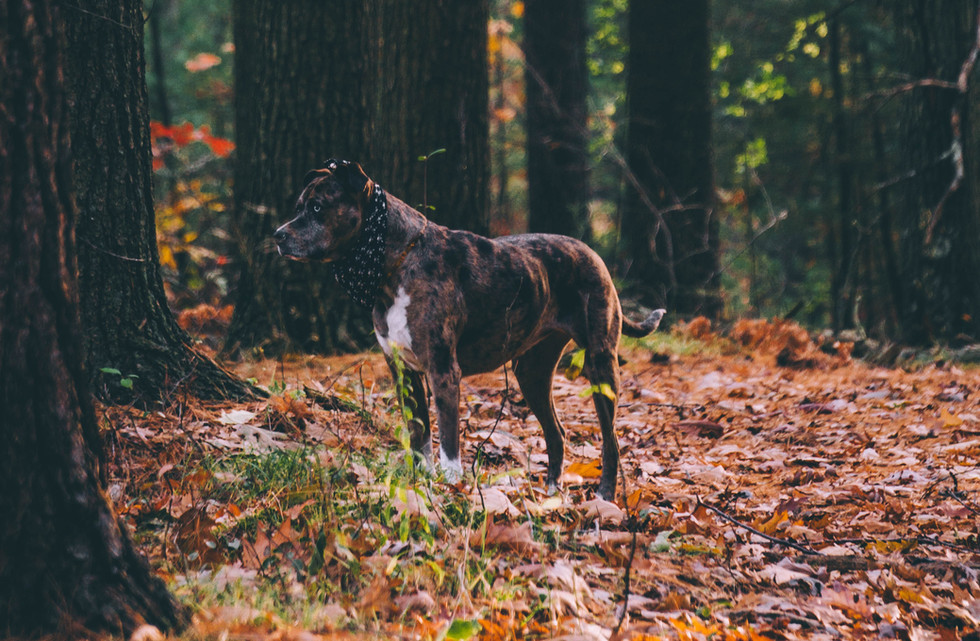 tree-nature-forest-leaf-dog-animal-12599