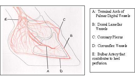 Clinical Application of the Digital Venogram