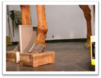Ensuring High-Quality Radiographs of the Equine Foot