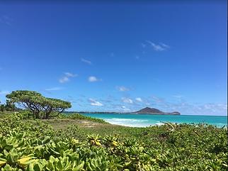 Aloha!: Individual Stay in Honolulu, Hawaii