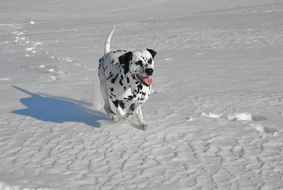 snow-winter-white-dog-animal-canine-1206