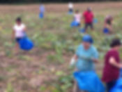 gleaning (1).JPG
