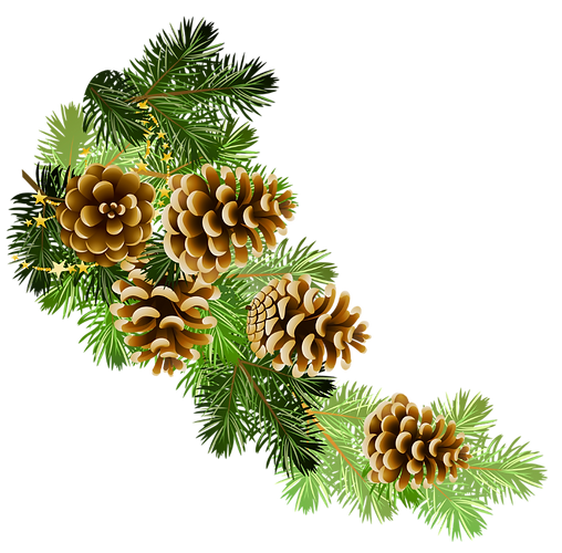 Pine-Cone-Transparent-Background-PNG.png