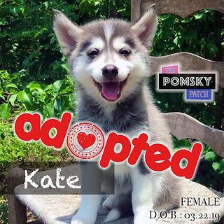 Kate3_Adopted.jpg