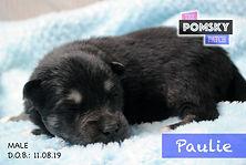 Paulie1.jpg