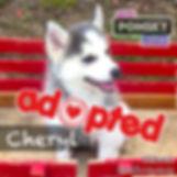 Cheryl4_Adopted.jpg