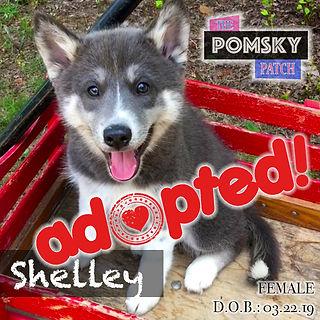 Shelley3_Adopted.jpg