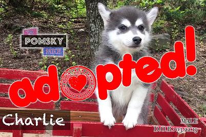 Charlie2_Adopted.jpg