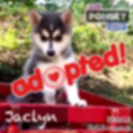 Jaclyn4_Adopted.jpg