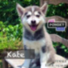 Kate3.jpg