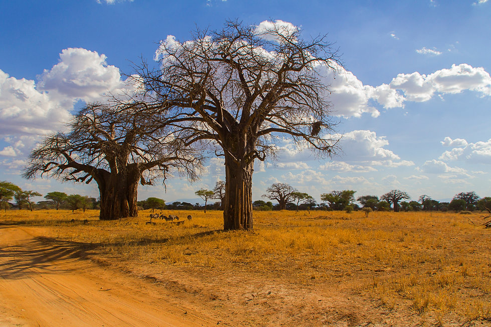 baobabs-in-kenya-nominated_t20_xXNmxQ.jp