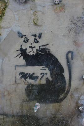 Rat of the Lanes
