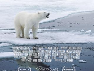 New Ice Bear website