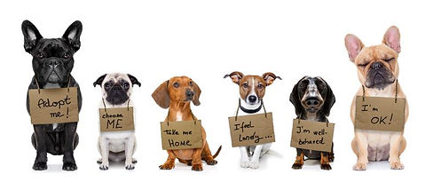 rescue-dogs.jpeg