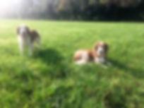 Alfie and tilly.jpg