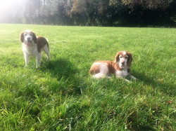 Alfie and tilly