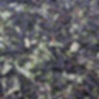 Смородина лист.jpg