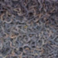 Иван-чай Традиционный листовой. Купить иван-чай