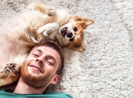 Why your dog's food is so important.