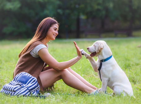 How to a Be a Socially Responsible Dog Owner