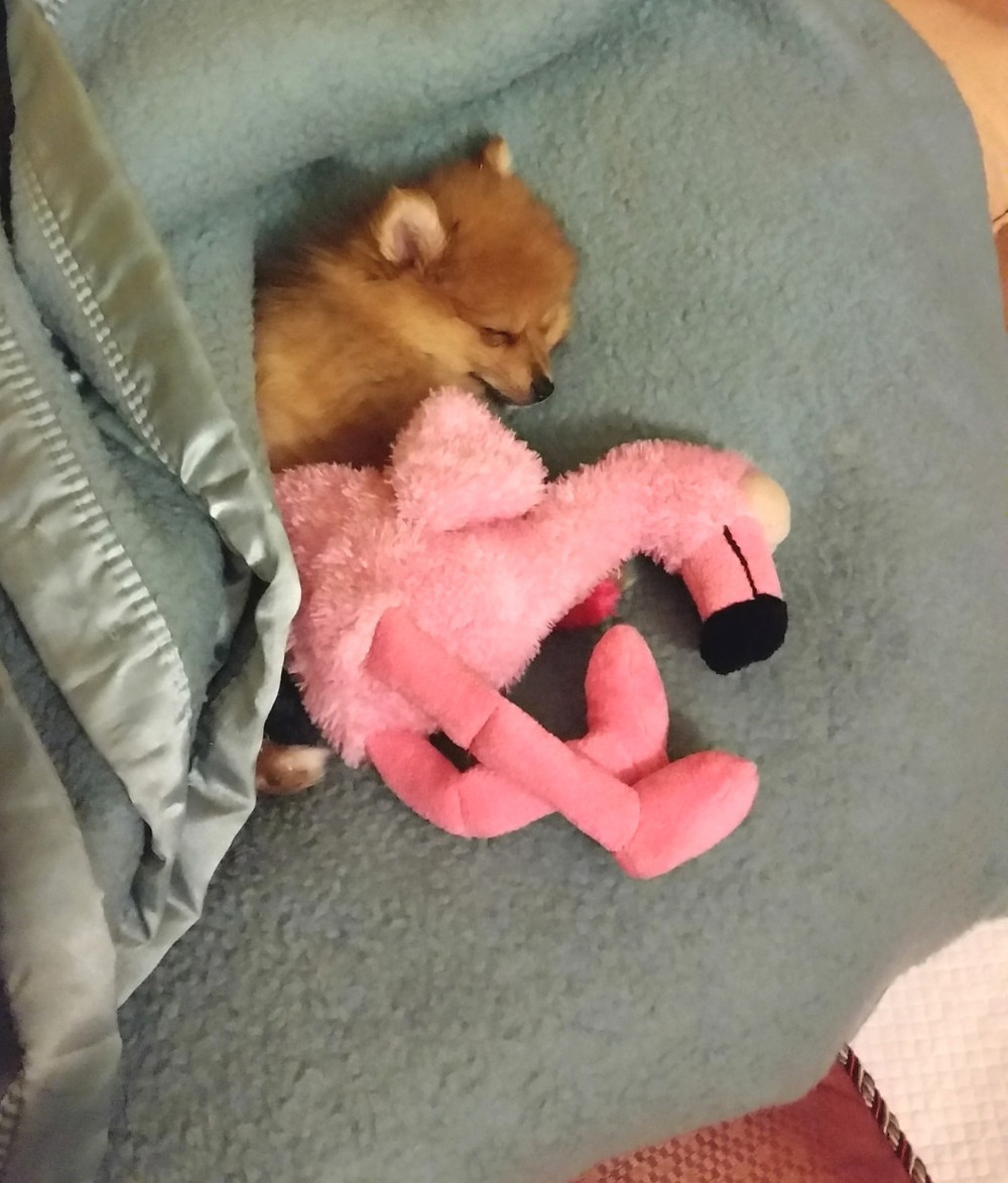 Puppy and Cuddle Toy