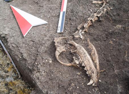 Canine Distemper - 12,000 B.C.E. until now.