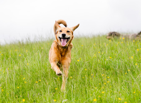 How Spiced Pumpkin Oatmeal Cookies Can Make Your Dog Healthier and Happier