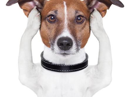 Deafness in Dogs