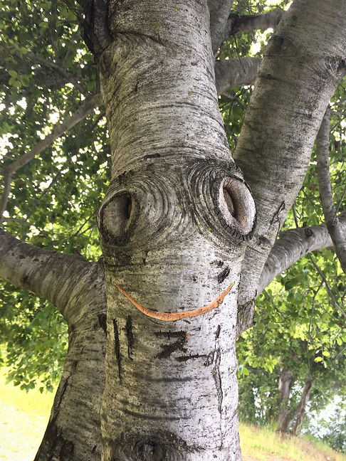 Smiling Tree.jpg