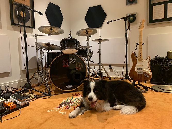 californicationmusicdog1.jpeg
