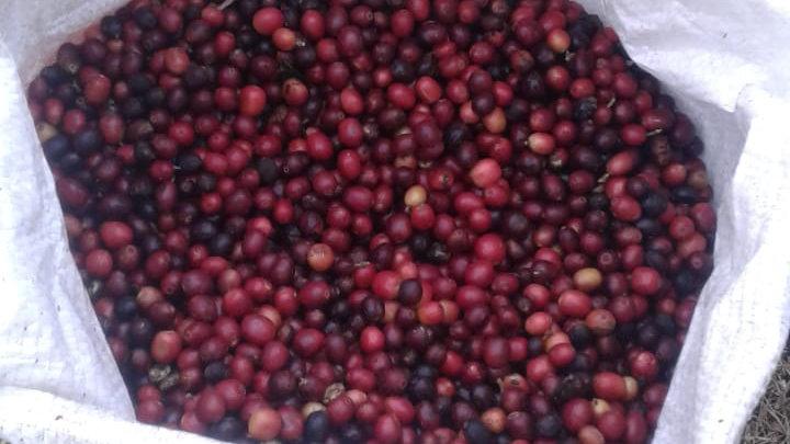 Café Frutas Vermelhas - SP1