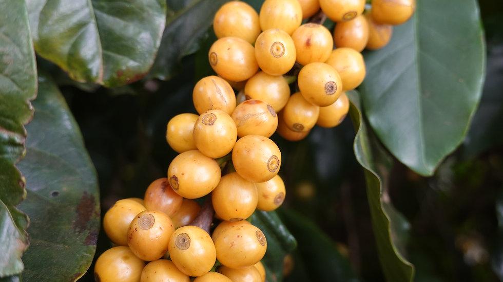 Café Frutas Amarelas