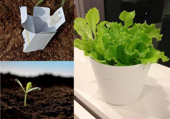 Floral box Salat.jpg