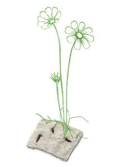 Floral Box - Samen-01.jpg