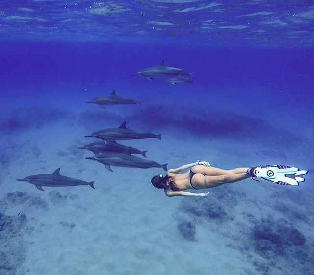 Swimming with #dolphin s with 💁🏻_celinelisee _#diving #scubadiving #underwater #padi #dive #ocean
