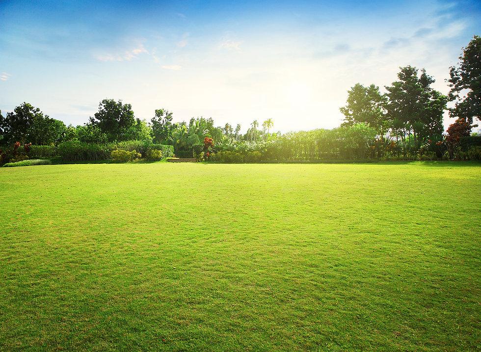 Natural green grass field in sunrise.jpg