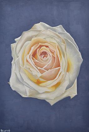 Rose Painting 'White Heart'