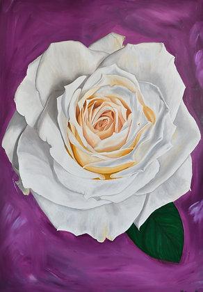 Rose Painting 'Meringue'