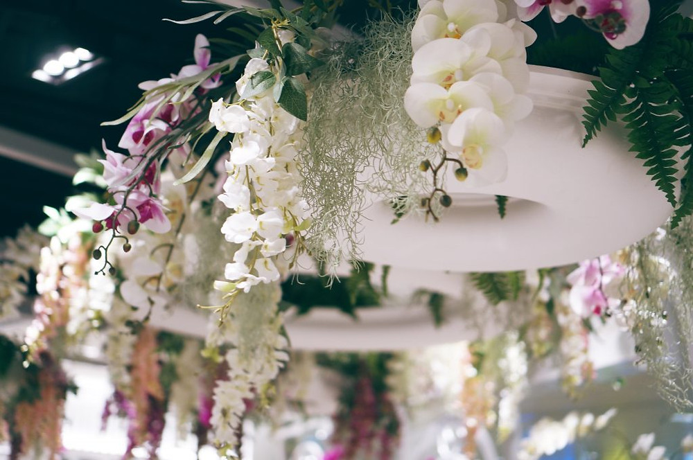 Hello Kitty Orchid Garden 5