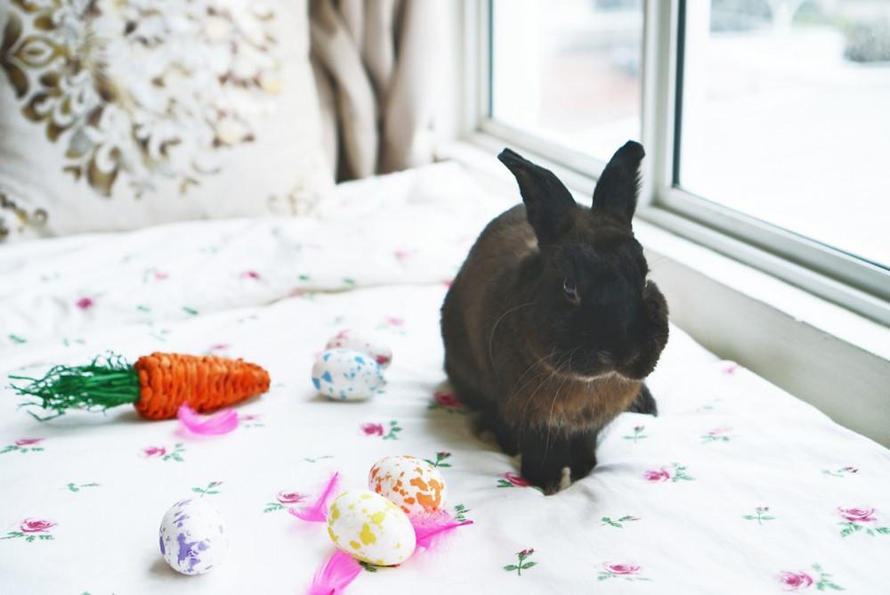 Easter-Bunny-Bebe