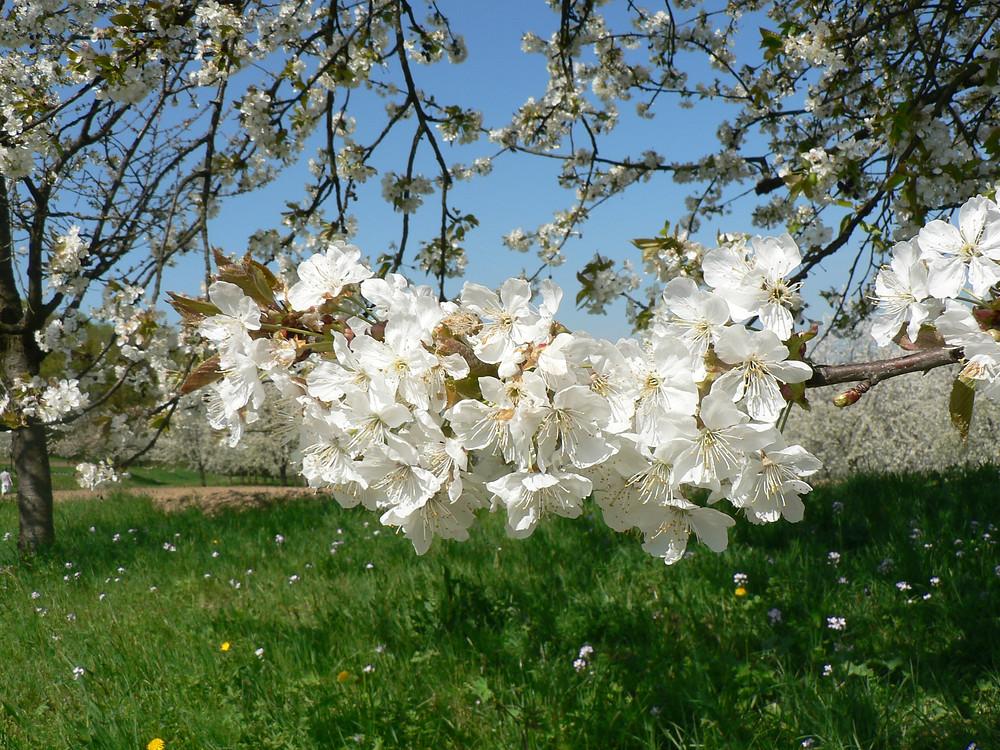 –Frühling
