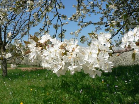 Fit in den Frühling mit Yinyoga
