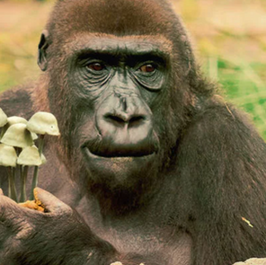 The Stoned Ape Hypothesis