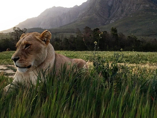 A Glimpse into South Africa with #MyArtTravels