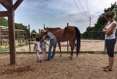 baby horsemanship