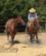 Doma e addestramento Ranch Horse's Soul