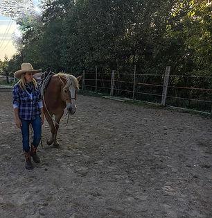 Lezione equitazione connessine con il cavallo