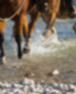 Escursioni e TrekkingRanch Horse's Soul