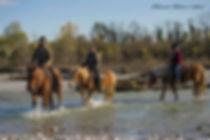 escursioni a cavallo Fvg